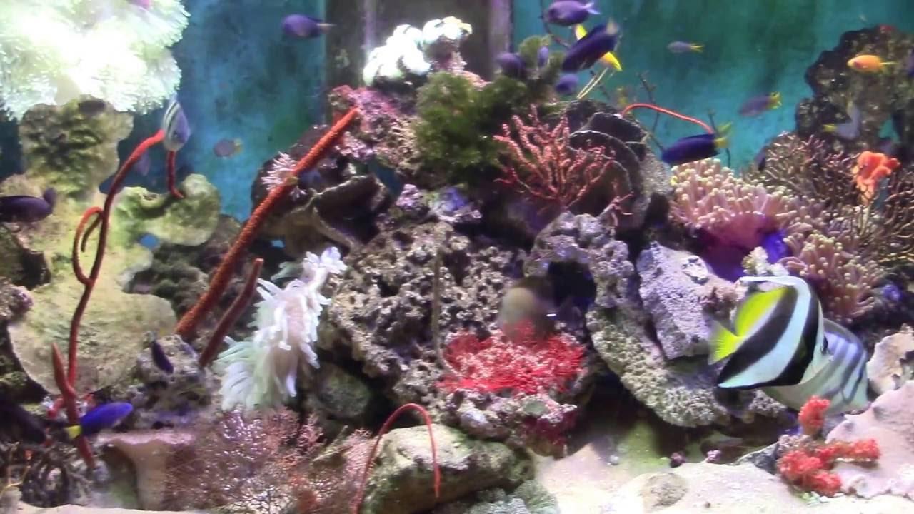 sea water fish tank bikini bottom fish tank. Black Bedroom Furniture Sets. Home Design Ideas