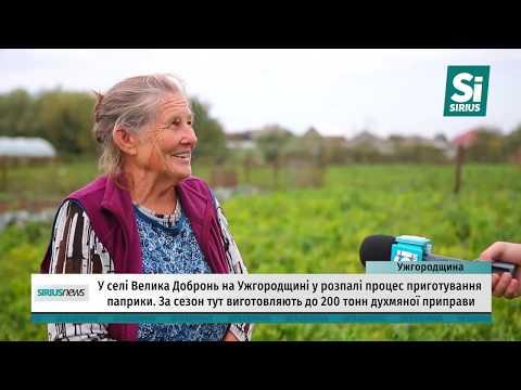 У селі Велика Добронь на Ужгородщині у розпалі процес приготування паприки