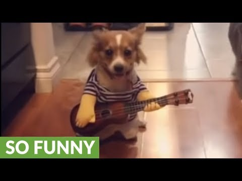 Eric Hunter - Dogie Plays Guitar For Treats