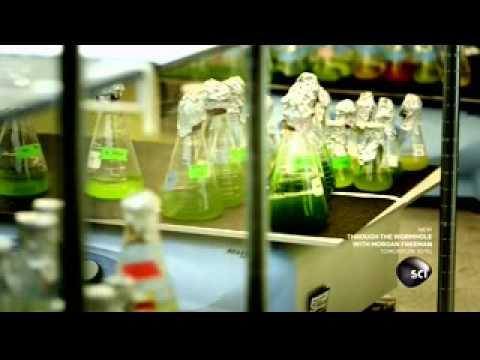 Worlds Strangest - Sustainable Biofuel