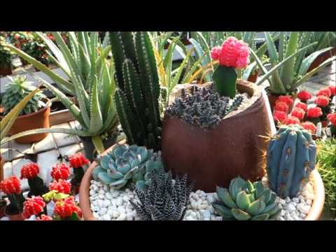 Ott's Exotic Plants Greenhouse & Nursery Tour: Schwenksville, Pennsylvania (INSIDE Part #2 of 2)