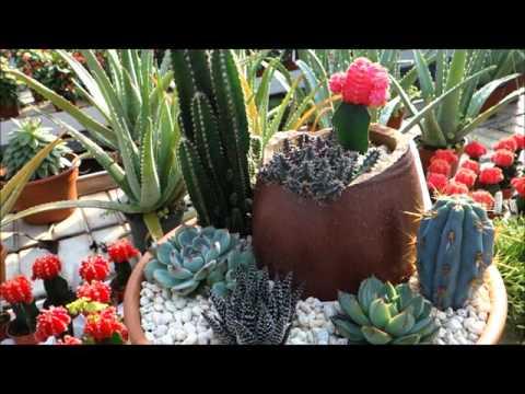 Ott's Exotic Plants Greenhouse & Nursery Tour: Schwenksville, Pennsylvania (INSIDE Part #2 of 2)