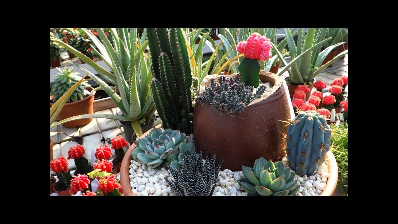 ott's exotic plants greenhouse