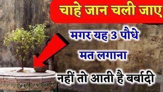 Tulsi plant benefits पूर परिवार नष्ट हो जाता है यह 5 पौधे कभी घर में मत लगाना यह पौधे होते हैं अशुभ