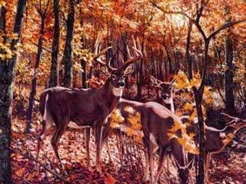 Cool Deer Paintings Youtube