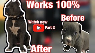 How to make your Pitbull 100 lbs ULTRA CLASS FAMILY