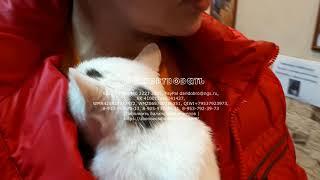 Кошки которым сейчас нужна ваша помощь любовь и забота   animal shelter waiting for help