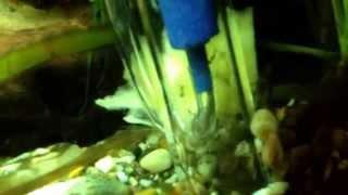 Diy Air Lift Aquarium Gravel Cleaner - Air Brick Added To Original Design  Part 2