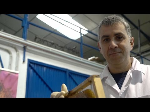 AS Rafael Bellido, an ecological beekeeper who is winning Europe over with Spain's best honey