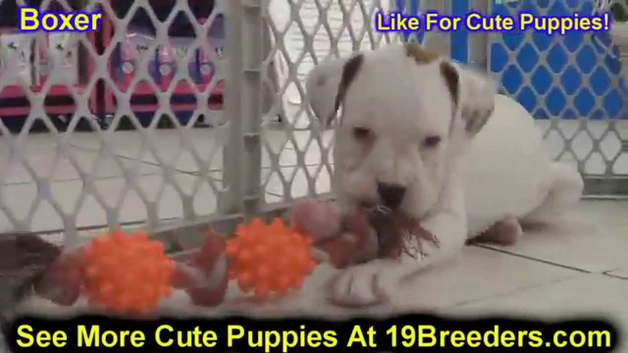 Search Results For Charleston Wv Pets Craigslist Bcitc Org