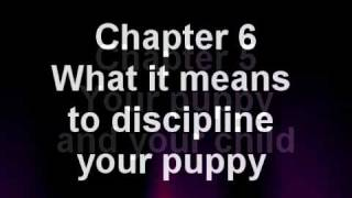 Labrador Retriever Training Book