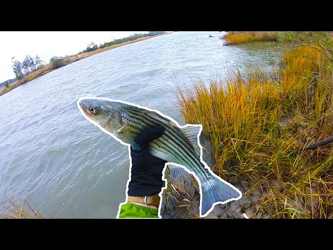 Delaware CANAL Fishing For Striped Bass + Birds