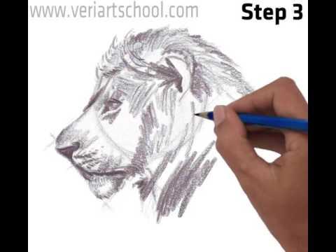 Male Lion Head, side view - YouTube