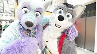 'Furry' enthusiasts gather for Eurofurence convention