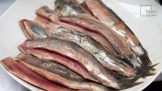 Herring   Herring are forage fishes, also known as silver darlings or silver of the sea.