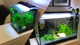 Upgrading the Shrimp Tank from start to finish
