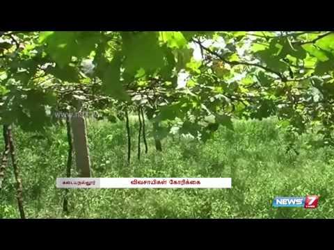 Grape Growers prospects turn bitter in Tirunelveli | Tamil Nadu | News7 Tamil |