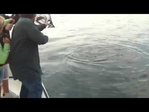 50 pound Striper in lake Oachita