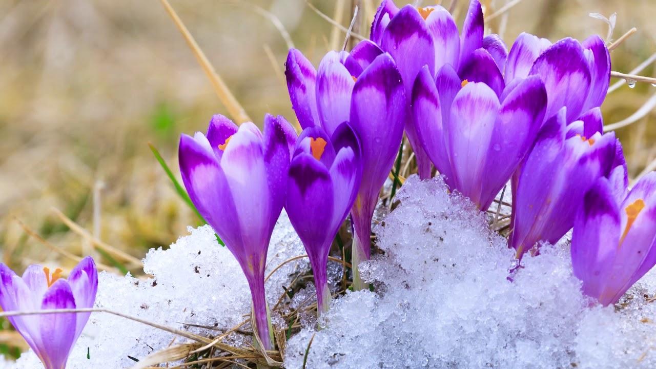 spring beginning janis tim peaceful