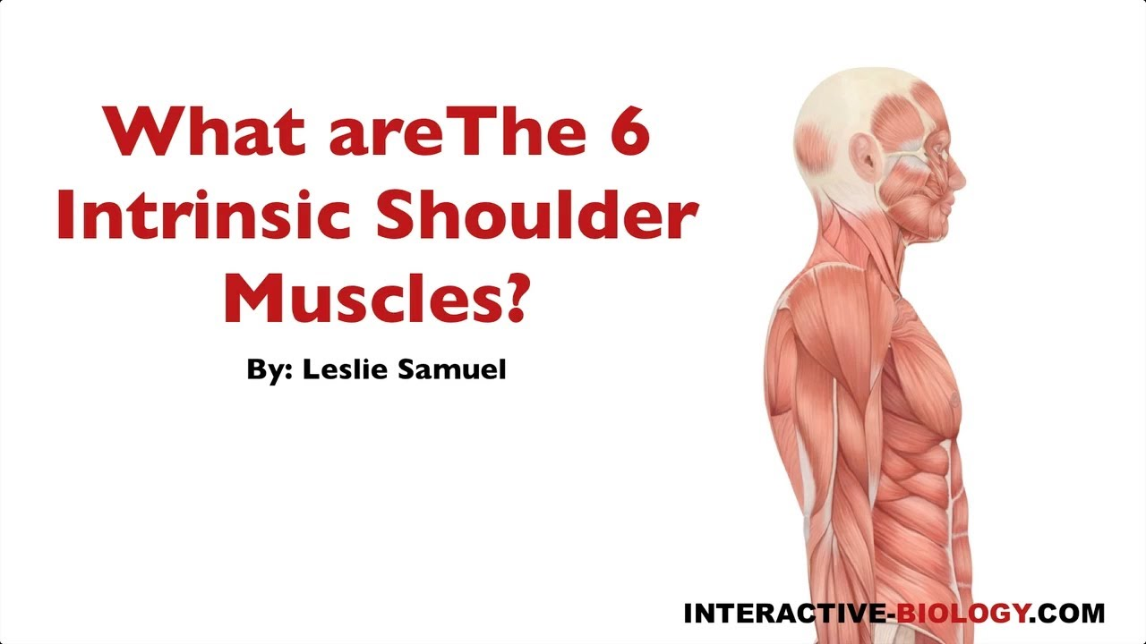 089 What Are The Six Intrinsic Shoulder Muscles Youtube