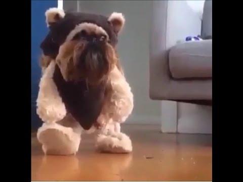 1分で笑えるおもしろ犬動画まとめ!