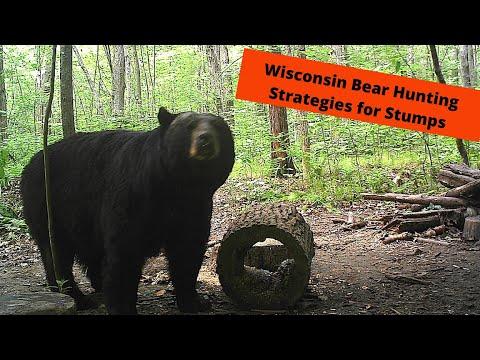 Wisconsin Bear Baiting Tactics | Hollow Stump