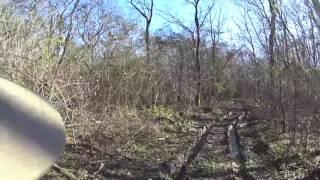 Удачная охота с Русской пегой гончей в лесу на зайца
