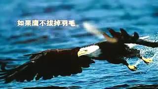 00 鷹的重生勵志片 640P高清 0002