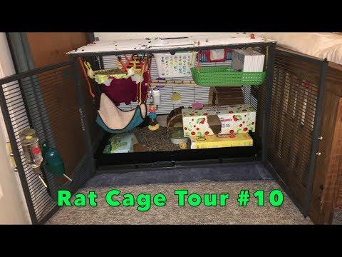 Rat Cage Tour #10