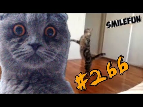 2019       Funny Cats