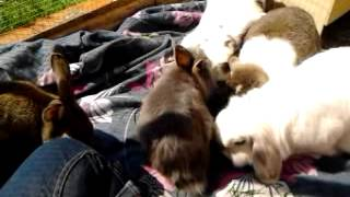 Bunny Picnic & Autumn Kisses (rip beautiful)