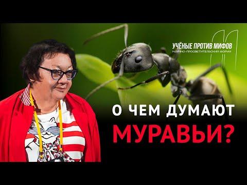 Мифы о муравьях. Жанна Резникова. Ученые против мифов 11-3