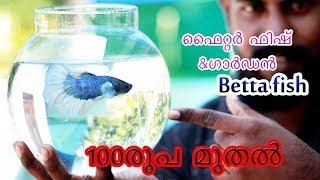 ഫൈറ്റർ ഫിഷും ഗാർഡനും betta fish (fighter fish) & aquarium and garden malayalam