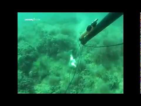 руководство по подводной охоте и фридайвингу в море