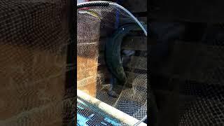 видео Селигер турбаза клев (базы отдыха на озере волго)