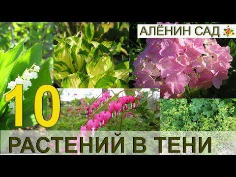 10 лучших многолетников для тени в саду