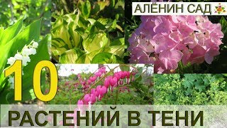 видео Тенелюбивые и теневыносливые растения для дачи: названия цветов и кустарников, какие овощи посадить в тени и полутени, примеры (25 фото)
