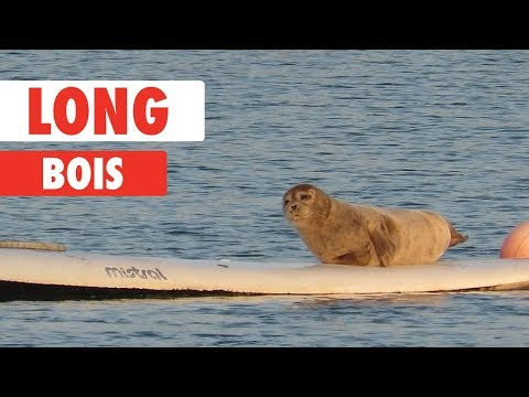 Long Bois | Funny Pet Video Compilation