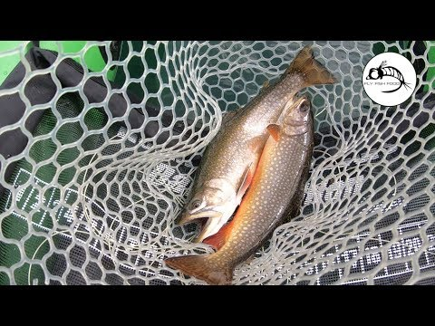 Brook Trout On Chironomids -- MIDGE TIP Line