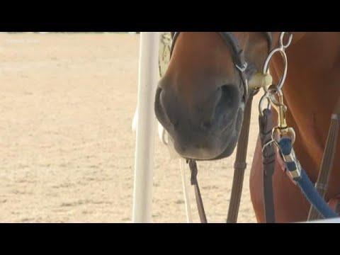 Virus Outbreak Leads To Quarantine Of Horses, Cattle In Colorado