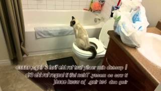 Toilet Train your cat in 6 weeks