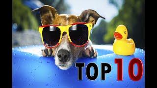 TOP 10 DOG BARKING VIDEOS COMPILATION 2019 ♥ DOG BARKING SOUND - FUNNY DOGS