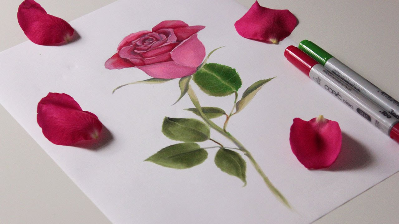rose speed drawing with copic marker