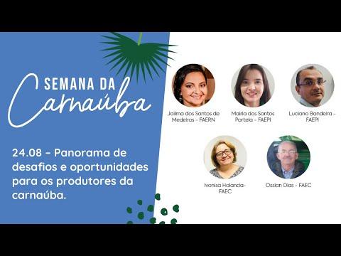 RESUMO 24.08   Semana da Carnaúba - Panorama de desafios e oportunidades para os produtores.