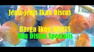 Mengenal jenis jenis Ikan Discus & Review harga Ikan Discus #Vlog