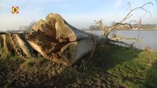 Theo Audenaerd uit Ravenstein legt verval bakenbomen vast