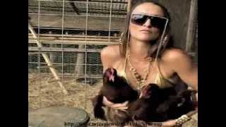 How To Build A Chicken Coop For Chickens