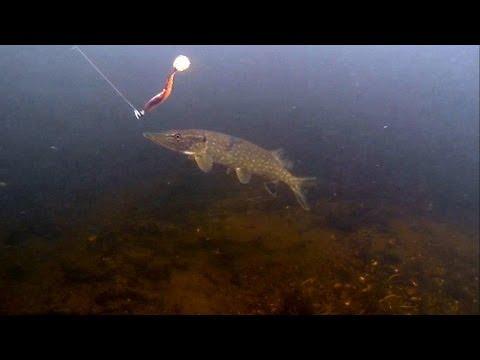 Fishing: pike attack lure / soft-bait underwater. Рыбалка на силикон: атака щуки по водой.