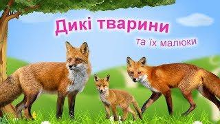 Дикі тварини. Тварини та їх дитинчата.  Тата, мами, малюки.