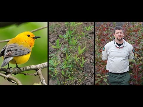 2014 Arbor Day Awards—Forest Lands Leadership Award: Tennessee Wildlife Resources Agency
